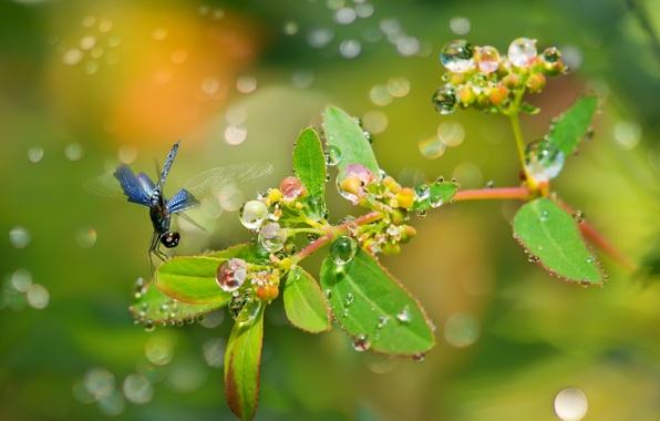 Картинка листья, капли, роса, блики, растение, ветка, стрекоза, плоды