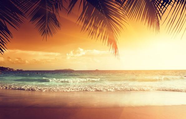 Картинка песок, море, пляж, закат, тропики, пальмы, берег, summer, beach, sea, ocean, coast, sunset, sand, paradise, …