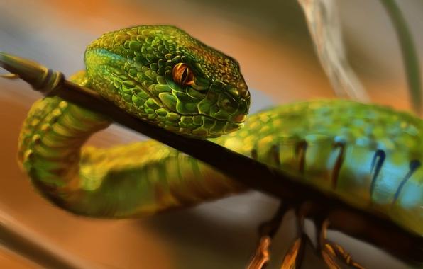 Картинка взгляд, природа, змея, ветка, чешуя, зеленая, ползет