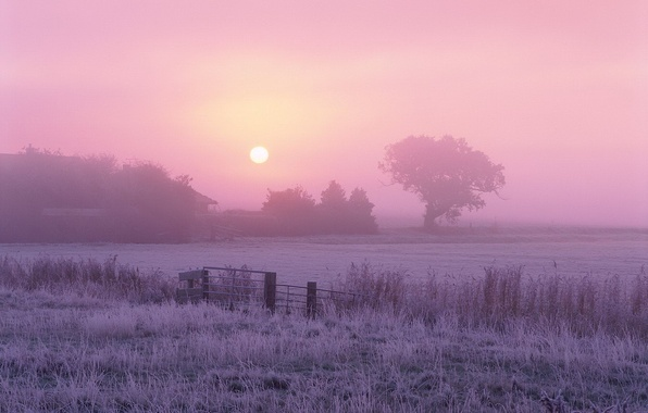 Картинка солнце, туман, дерево, Утро, мороз