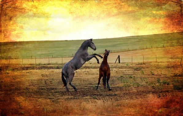 Картинка поле, стиль, фон, кони