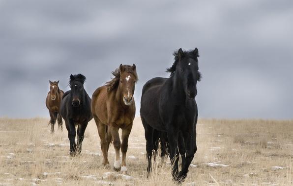 Картинка поле, кони, дикие
