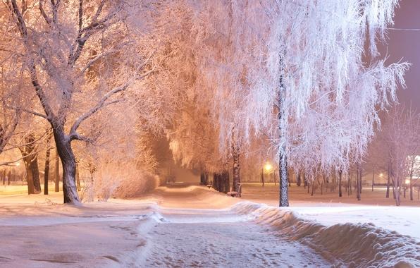 Картинка зима, снег, деревья, ночь, огни, парк, фонари, дорожка, аллея, скамейки