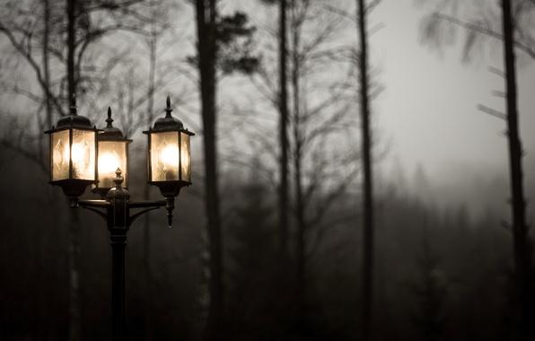 Картинка свет, деревья, природа, туман, пасмурно, фонарь