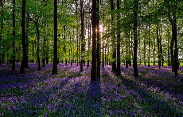 Картинка лес, солнце, деревья, цветы, природа, весна, colorful, forest, trees, nature, flowers, sun, spring