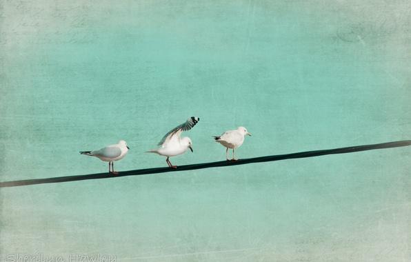 Картинка птицы, стиль, цвет