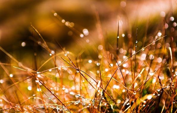Картинка трава, вода, капли, макро, роса