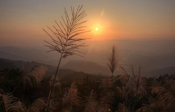 Картинка трава, солнце, блики, рассвет, растения, метелки