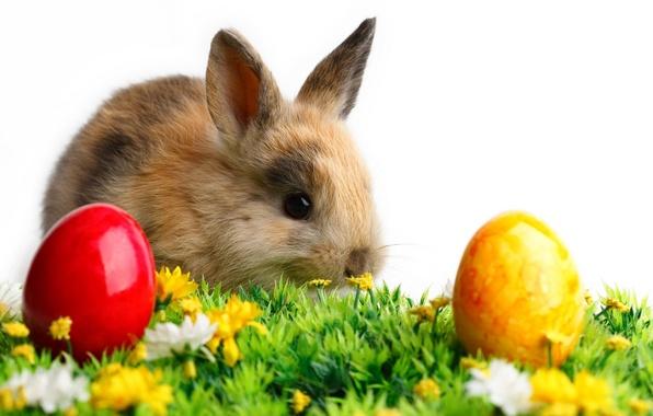 Картинка белый, трава, цветы, фон, животное, цветные, яйца, кролик, пасха, ушки
