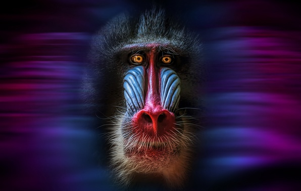 Картинка морда, фон, обезьяна, mandrillus