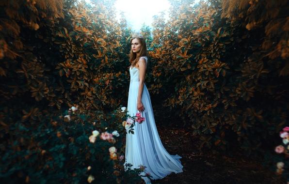 Картинка девушка, стиль, настроение, розы, платье, диадема, кусты