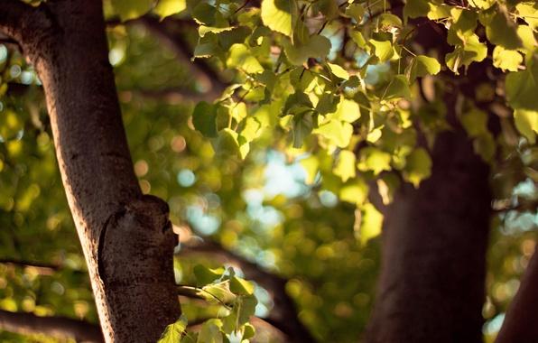 Картинка осень, листья, жёлтый, дерево, green, листва, листок, фокус, размытие, ствол, зелёный, коричневый, листки, yellow, autumn, …