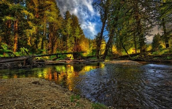 Картинка осень, лес, пейзаж, природа, река, forest, river, landscape, nature, beautiful, autumn, cool, nice