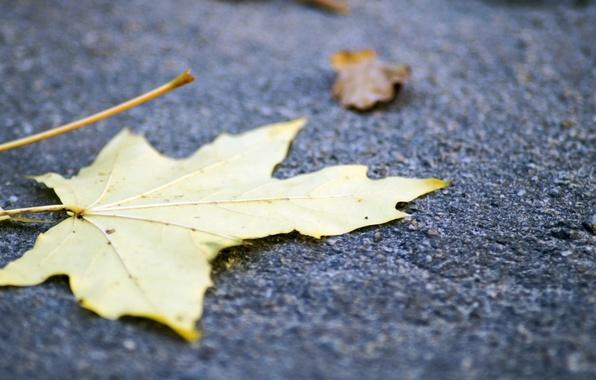 Картинка осень, листья, листва, forest, river, trees, landscape, nature, autumn, view, leaves, fall, foliage, fscenery