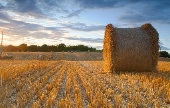 Картинка поле, лето, пейзаж, сено