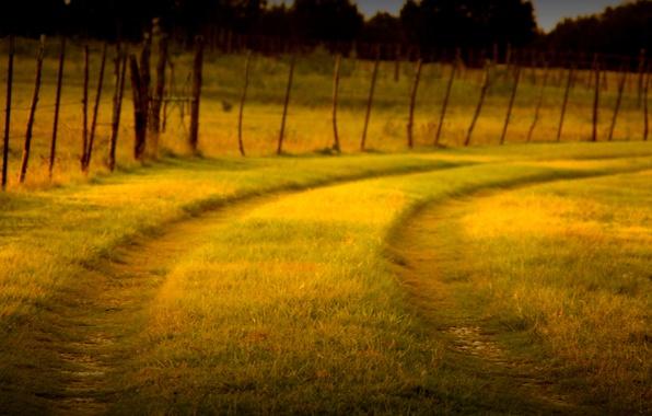 Картинка зелень, трава, макро, природа, фон, widescreen, обои, забор, ограда, ворота, ограждение, дорожка, wallpaper, тропинка, широкоформатные, …