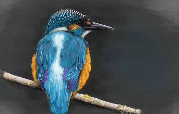 Картинка птица, ветка, зимородок, kingfisher