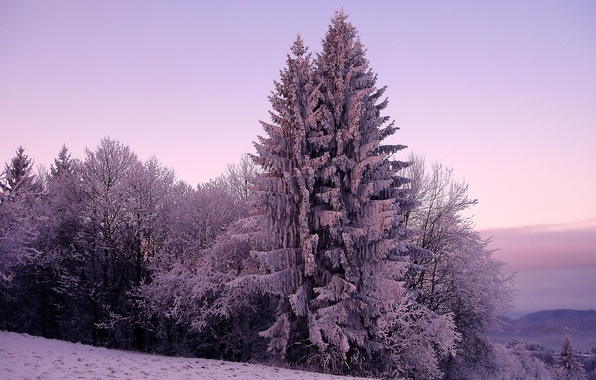 Картинка холод, зима, небо, снег, деревья, природа, дерево, холмы, ель, ели, мороз