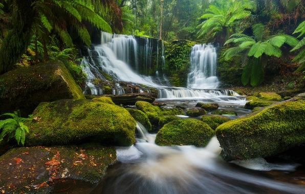 Картинка лес, река, камни, водопад, Австралия, каскад, Australia, Tasmania, Тасмания, Mount Field National Park, Национальный парк …