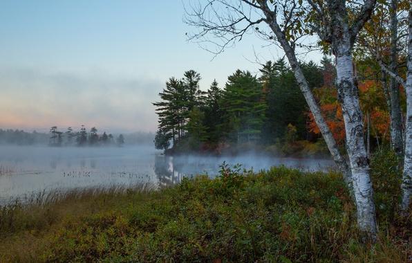 Картинка осень, лес, небо, деревья, природа, туман, река, утро, береза