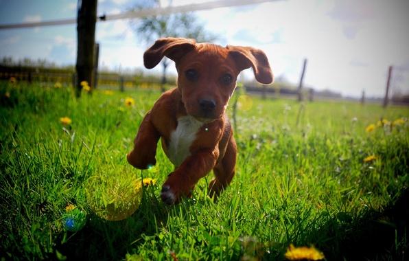 Картинка лето, солнце, бег, щенок