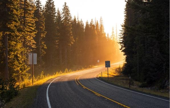Картинка дорога, лес, солнце, лучи, свет, деревья, путь, разметка, поворот, ели, обочина, road, навстречу