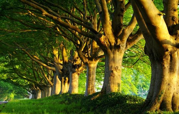 Картинка дорога, зелень, лето, трава, деревья, свежесть, природа, дерево, весна, утро, леса