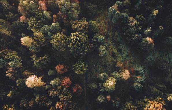 Картинка осень, лес, деревья, природа, вид сверху