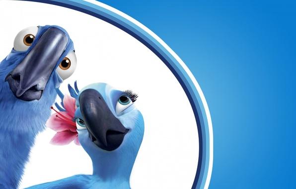 Картинка цветок, взгляд, птицы, фон, голубой, мультфильм, удивление, клюв, пара, попугаи, ара, рио, голубчик, жемчужинка, рио-де-жанейро