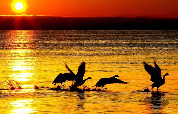Картинка море, волны, вода, солнце, закат, природа, отражение, река, фон, обои, wallpaper, лебеди, силуэты, широкоформатные, background, …