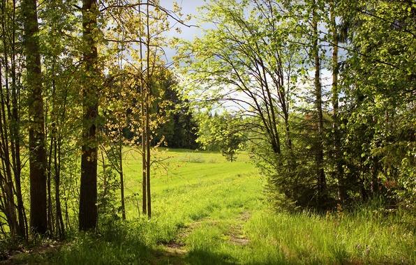 Картинка зелень, лес, лето, деревья, природа, солнечно, тропинка