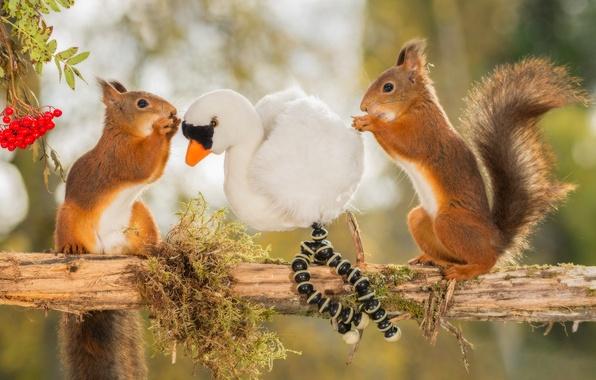 Картинка животные, ягоды, дерево, птица, игрушка, ветка, рябина, белки, грызуны, чётки