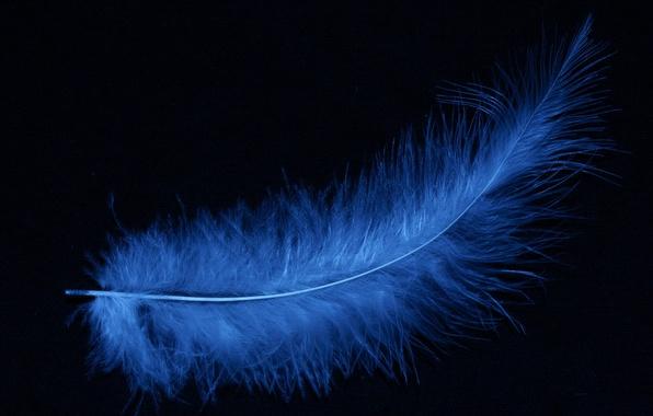 Картинка перо, голубое, черный фон