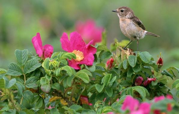 Картинка Цветы, Птица, Листья