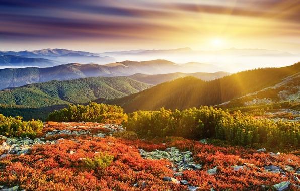 Картинка трава, солнце, лучи, деревья, природа, камни, рассвет, земля, холмы