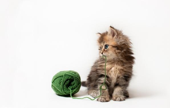 Картинка кошка, клубок, котенок, игра, белый фон, нитки, Daisy, Ben Torode