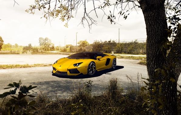 Картинка Roadster, Lamborghini, Front, Vorsteiner, Yellow, LP700-4, Aventador, Supercar