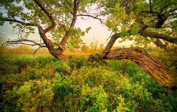 Картинка небо, трава, дерево, луг