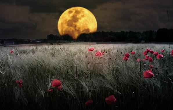 Картинки луна и цветы