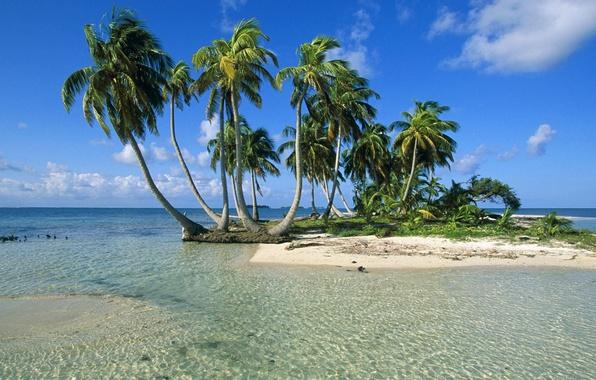 Картинки природа море пальмы