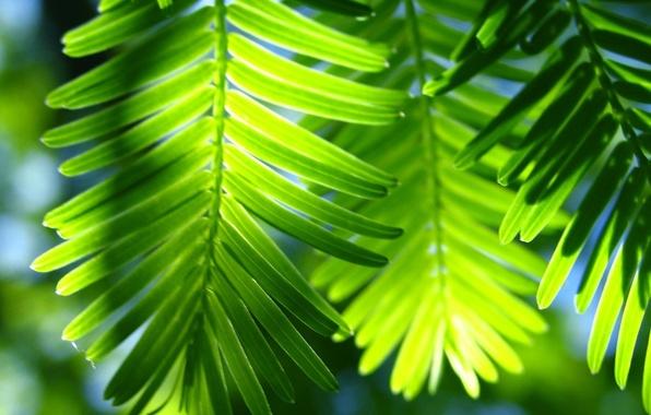 Картинка листья, зеленая фигня, пальма