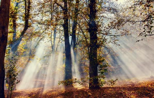 Картинка осень, лес, лучи, свет, деревья, природа, листва