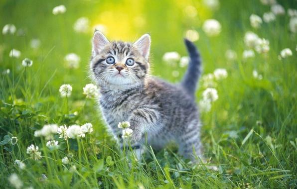 Картинка лето, трава, котенок, день