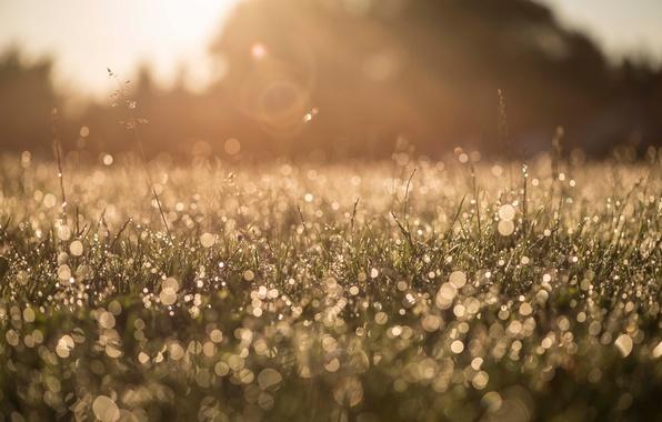 Картинка трава, макро, природа, роса, блики, утро, боке