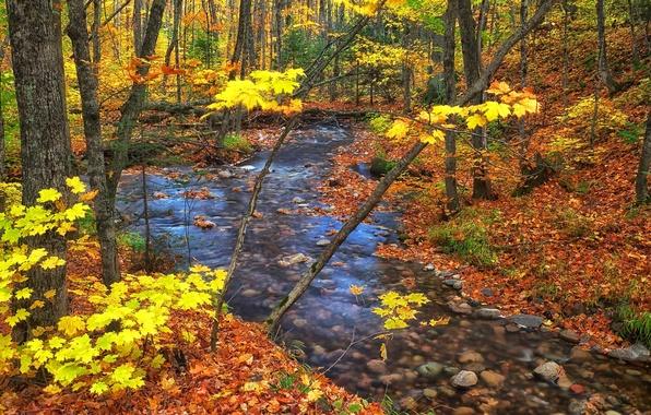 Картинка осень, лес, листья, деревья, ручей, Канада, Онтарио