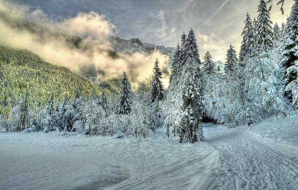 Картинка зима, лес, облака, снег, деревья, горы, природа, туман, тропа