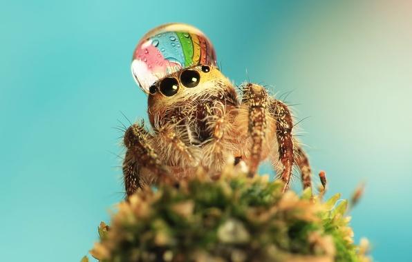 Картинка макро, фон, капля, паук
