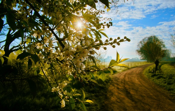 Картинка дорога, поле, лес, трава, деревья, закат, природа, вид, весна, grass, прогулка, forest, road, trees, field, …