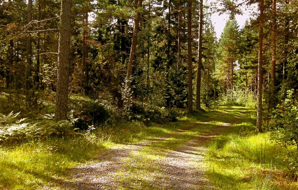 Картинки на рабочий стол лето природа лес