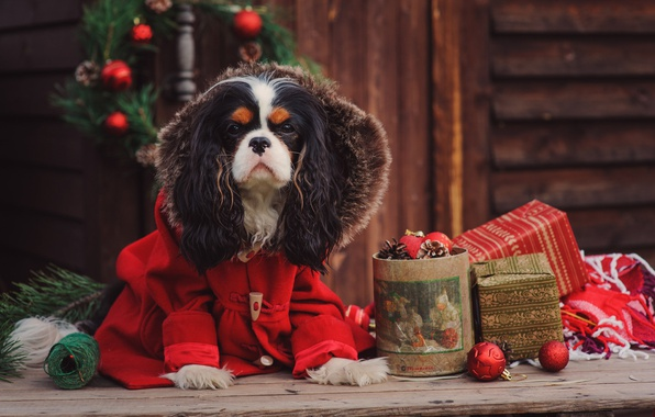 Картинка шарики, клубок, праздник, игрушки, доски, новый год, рождество, собака, ветка, подарки, нитки, венок, пальто, сосна, …